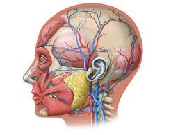 A Closer Look at Head Injuries